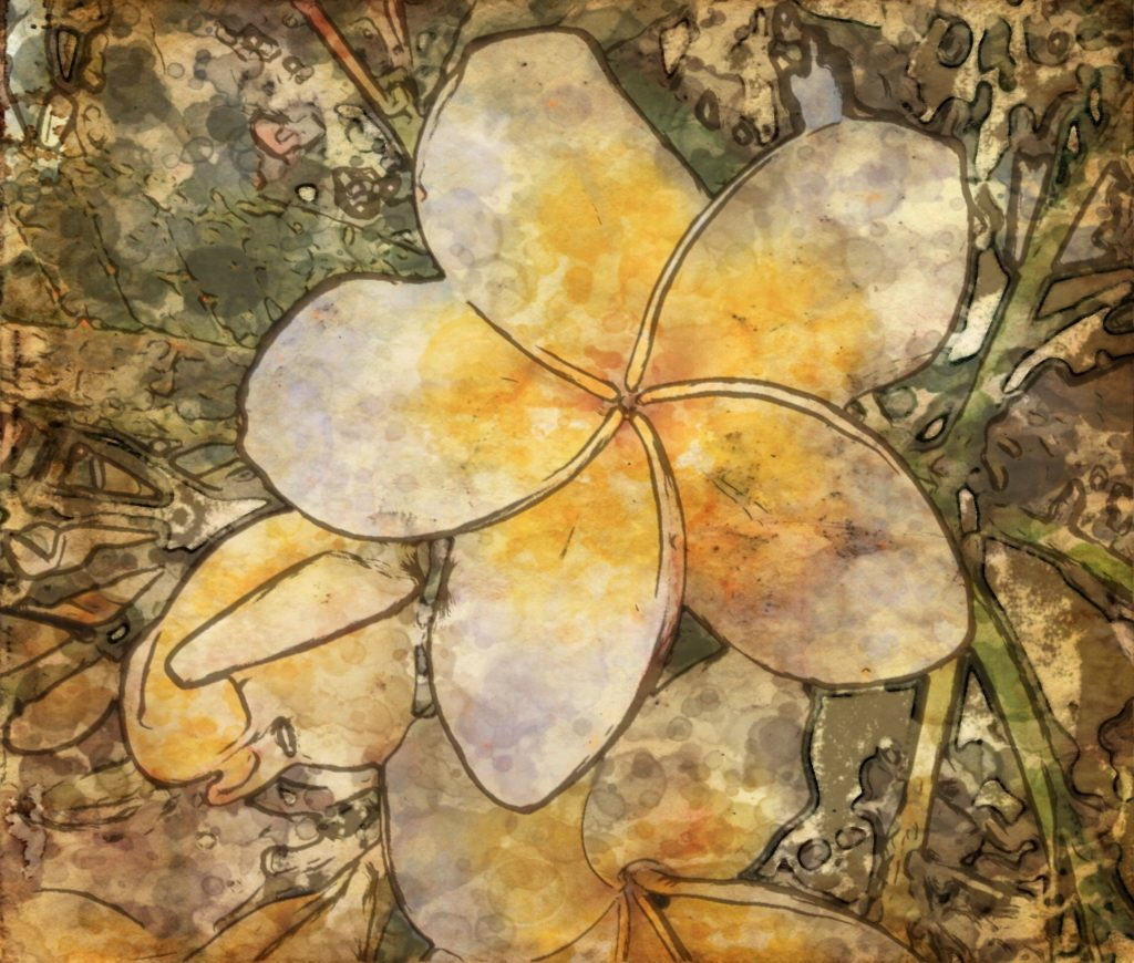 Tropical Blooms series